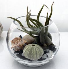 Zen garden terrarium kit- small desktop fish bowl- live Tillandsia medusae air plant, crushed glass, sea urchin, pebble and shell via Etsy