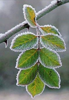 Leaves in winter! Perfection!