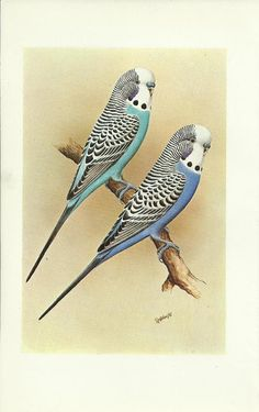 My Mammaw and Pappaw had a bird like this. A green one too. I loved playing with them. I especially loved it when it would climb up on Pappaw's shoulder and give him a kiss :D