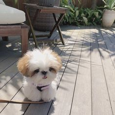 Super Cute Puppies, Cute Baby Dogs, Cute Little Puppies, Cute Dogs And Puppies, Cute Little Animals, Cute Funny Animals, Doggies, Fluffy Animals, Animals And Pets