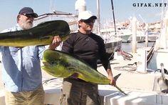 Pasión por la pesca: ¡UNA BUENA PESCA! http://es.foto.com/