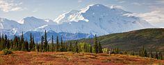 Denali, Alaska, Wonder Lake, Mt. McKinley, color, fall, mountain, Caribou, antler, tree                photo by Anthony Gibson