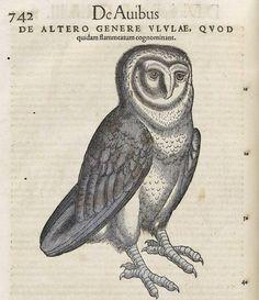 Illustration of an owl from Konrad Gesner, Historiae Animalium, 1551