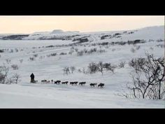 Finnmarksløpet in Northern Norway; Europe´s northernmost and longest sled dog race. Mars 2013.