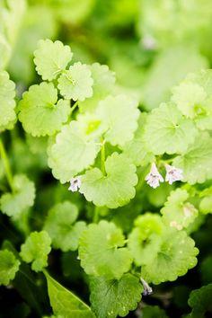 Villiyrtit omalta pihalta | Meillä kotona Recipes From Heaven, Preserves, Gardening Tips, Herbalism, Vegetarian, Baking, Vegetables, Health, Food