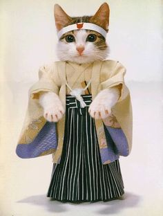 Japan #cat