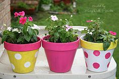 old terra cotta pots painted and given new life. polka dots made with a round sponge brush. Easy peasy!