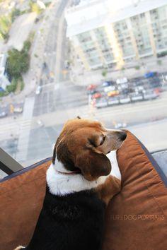 King of Spadina. Toronto Creative Dog Photography