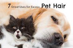 7 Surprising Ways to Use Pet Hair