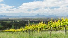 View from Mount Trio winery in Porongorup looking towards the Stirling Ranges
