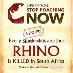Halfway through 2014, poachers are killing at least three African rhinos every day. More than 500 rhinos have been poached in South Africa alone; almost halfway to the 1,004 killed in 2013. We fear it will get worse before it gets better. - See more at: http://www.rhinos.org/operation-stop-poaching-now#sthash.WOMfpabz.dpuf