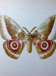 African Moth Print by Frantisek Prochazka Vintage by VintagePatina, $18.00