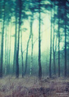 Dan Isaac Wallin - Fairyland fra vissevasse