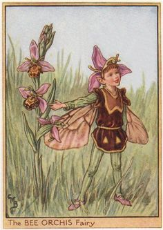 FLOWER FAIRIES/BOTANICALS: The Bee Orchis Fairy; This is an original vintage Cicely Mary Barker Flower fairies colour print. It is not a modern reproduction, c1948; approximate size 11.0 x 7.5cm, 4.25 x 3 inches
