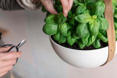 The Tom Raffield Morvah Planter makes the perfect place for growing kitchen herbs.