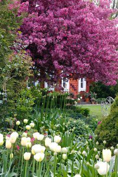 Garden Of Eden, Garden Inspiration, Garden Plants, Exterior, Heaven, Dreams, Spring, Decor, Garten