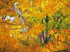 Fall Colors - Temperance River State park, along Minnesota's north shore Lake Superior