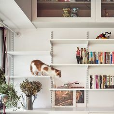 Long shelving staggered at different heights creates platforms for cats to jump between inside this 45-square-metre studio flat in Taipei, which was overhauled by Taiwanese design practice ST Studio to create a flexible space for the owner and his two cats.