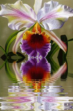 flowergirl91 - My Desktop Nexus