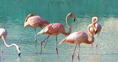 Tryp Cayo Coco Hotel, All-Inclusive hotel of Meliá Cuba in Cayo Coco. Cayo Coco Cuba, Cuba Hotels, Coco Photo, Flamingo Hotel, Everything Pink, Holiday Destinations, Fencing, Favorite Holiday, Places To See