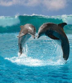 In my humble opinion, the only place Dolphins should ever be....free in the sea