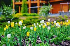 #avalonpark #tulips #nature #flowers #sun #happyday #spring #beautifulseason #daliygram