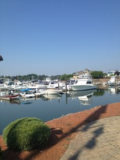 danversport yacht club father's day brunch