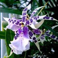 january-2010-volunteer-park-conservatory-007-copy1.jpg (2733×2737)