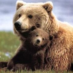 The Bear Bear folklore from around the world.