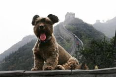 Comenzamos viaje en 3, 2, 1....    Viajá con Avantrip!  #Avantrip #Viajar #Viaje #Animales #Animal #Animaladas #Viajeros #Travel #Mundo #Naturaleza #Conocer #Vintage #Perro #Dog #Dogs #Perros #China #MurallaChina #ChinaWall