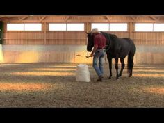 Training a horse for mounted archery (desensitization)