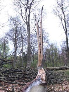 Wabisabi træ