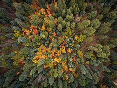 Viewed from the air, Mogollon Rim trees show their fall colors. Photo by: Michael Wilson