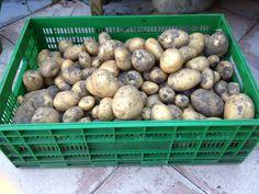 Een gedeelte van de anáis. Een heerlijke aardappel trouwens.