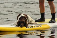SUP Dog Kurse Stand Up Paddling mit Hund Alster Hamburg I