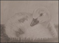 Duck by 8manu on DeviantArt