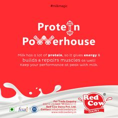 Check all healthy, tasty as well as fresh milk, milk products, dairy foods & beverages from Red Cow Dairy. Milk Nutrition, Protein Nutrition, Protein Foods, Protein Power, Fresh Milk, No Dairy Recipes, Bone Health, Toot, Authenticity