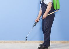 pest control companies in Ft Lauderdale