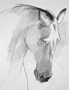 "See a mini-demo on how to draw a horse's face, from David Sanmiguel's ""Drawing Horses: Basic Drawing and Painting Techniques."""