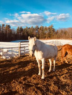 Quality horseback riding and ranch experiences. Riding lessons, cabins on the lake, rodeos, horseback vacations and trail riding for all levels. Trail Riding, Horse Riding, Lakeside Cabin, Riding Lessons, Winter Cabin, Lake Cabins, Ranch Life, Family Day, Guest Services