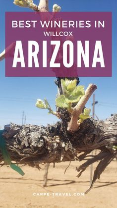 Winter Destinations, Amazing Destinations, Vacation Destinations, Dream Vacations, Arizona Travel, Arizona Usa, Packing List For Vacation, Vacation Trips, Willcox Arizona