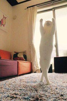 日本の猫が世界中のインターネットユーザーの心を釘付に : キニ速