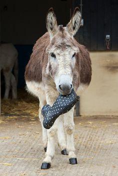 Donkey Sanctuary June 2015 47 | von eye hart
