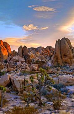 Joshua Tree National Park, California - Science And Nature California National Parks, Us National Parks, Parc National, California Usa, California Camping, Südwesten Usa, Places To Travel, Places To See, Travel Destinations