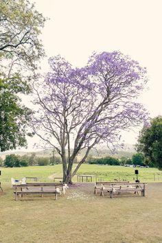 Jacaranda tree: http://www.stylemepretty.com/australia-weddings/queensland-au/2015/05/21/rustic-sunshine-coast-wedding-at-kenilworth-homestead/ | Photography: Calli B - http://www.callibphotography.com.au/