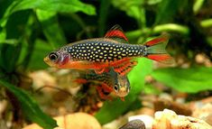 There are many types of tropical fish that you keep in your freshwater aquarium. Here are the best tropical fish species to keep if you're a beginner . Tropical Fish Aquarium, Tropical Fish Tanks, Saltwater Aquarium, Aquarium Design, Fish Ocean, Tropical Freshwater Fish, Freshwater Aquarium Fish, Betta Fish Care, Horses