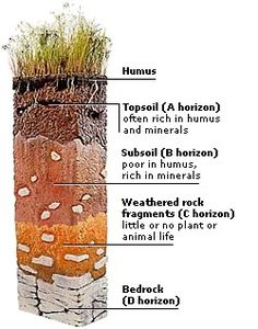 Humus is the well-decomposed, more or less stable part of the organic matter found in mineral soils. Teaching Science, Science Activities, Science Room, Teaching Resources, Earth Science, Science And Nature, Permaculture, Soil Layers, 6th Grade Science
