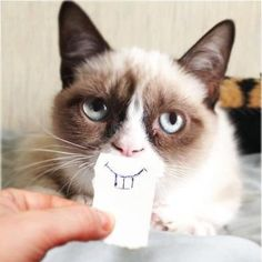 The-Grumpy-Cat-Is-Finally-Happy-Very-Cute-Funny-Picture