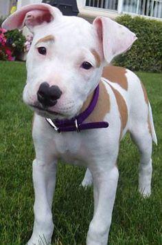My baby. Pitbull/American Bulldog mix. Needs lots of