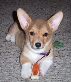 So cute! Want one!